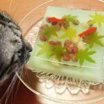 愛猫は見ていた!夫婦で減量。夫は糖尿病の食事療法。【File No. 1】