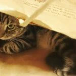 愛猫は見ていた!むくみ改善とMEC食との出会い【File No.6】