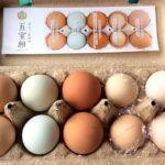 【伊豆三島卵屋】卵の宝船 五宝卵(ごほうらん)