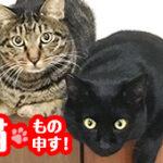 """【猫、もの申す! NO.1】こわ~い糖質液体  """"エナジードリンク"""" のトラップ"""